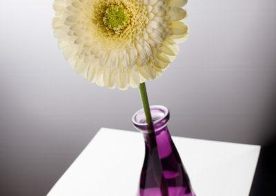 Blume Vase Viereck Produktfotografie